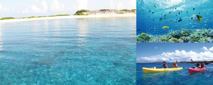 ソード フィッシュ 沖縄